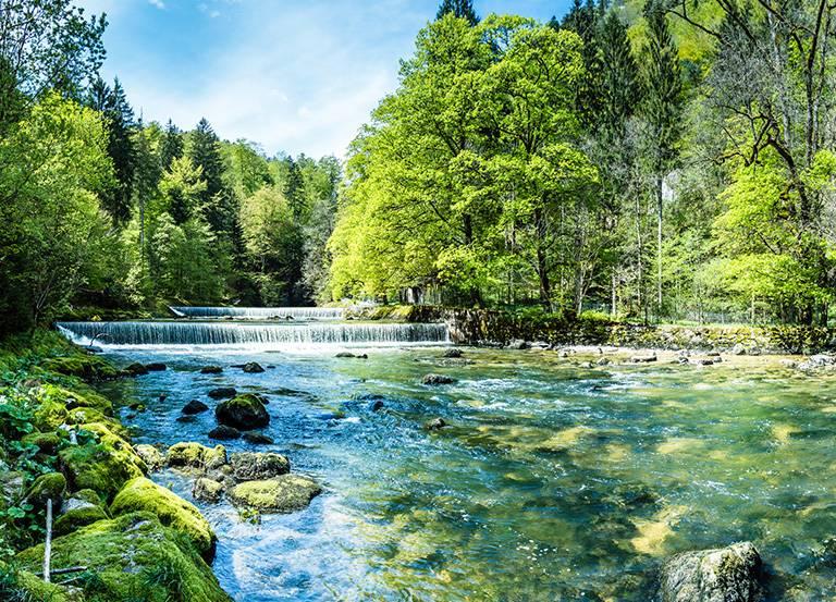 rwąca rzeka wlesie