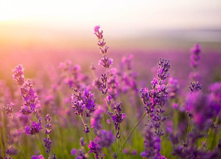 kwiaty nałące
